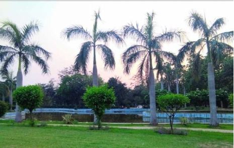 Nehru Park Trees